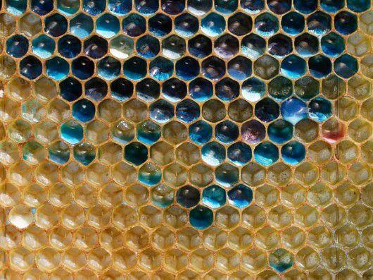 bees_blue_honey.jpg.560x0_q80_crop-smart